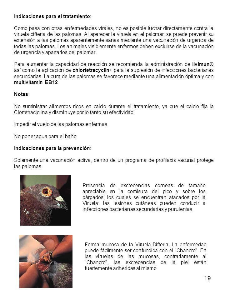 19 Indicaciones para el tratamiento: Como pasa con otras enfermedades virales, no es posible luchar directamente contra la viruela-difteria de las palomas.