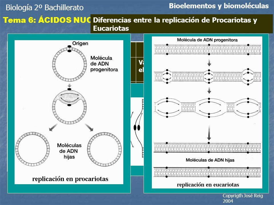 Biología 2º Bachillerato Bioelementos y biomoléculas Tema 6: ÁCIDOS NUCLEICOS Diferencias entre la replicación de Procariotas y Eucariotas ProcariotasEucariotas Un solo cromosoma con un solo origen de replicación Varios cromosomas y en cada uno de ellos varios orígenes de replicación Fragmentos de Okazaki de 1000 a 2000 nucleótidos Fragmentos de Okazaki de 150 a 200 nucleótidos No existen nucleosomasLos nucleosomas suponen un obstáculo para el avance de la replicación.