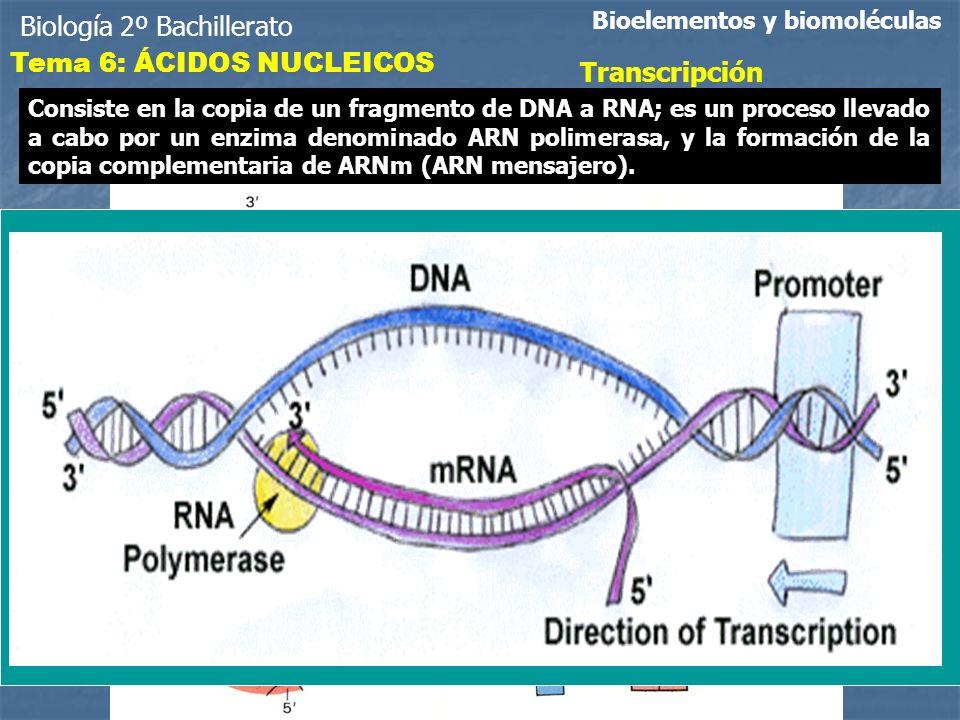 Biología 2º Bachillerato Bioelementos y biomoléculas Transcripción Consiste en la copia de un fragmento de DNA a RNA; es un proceso llevado a cabo por un enzima denominado ARN polimerasa, y la formación de la copia complementaria de ARNm (ARN mensajero).