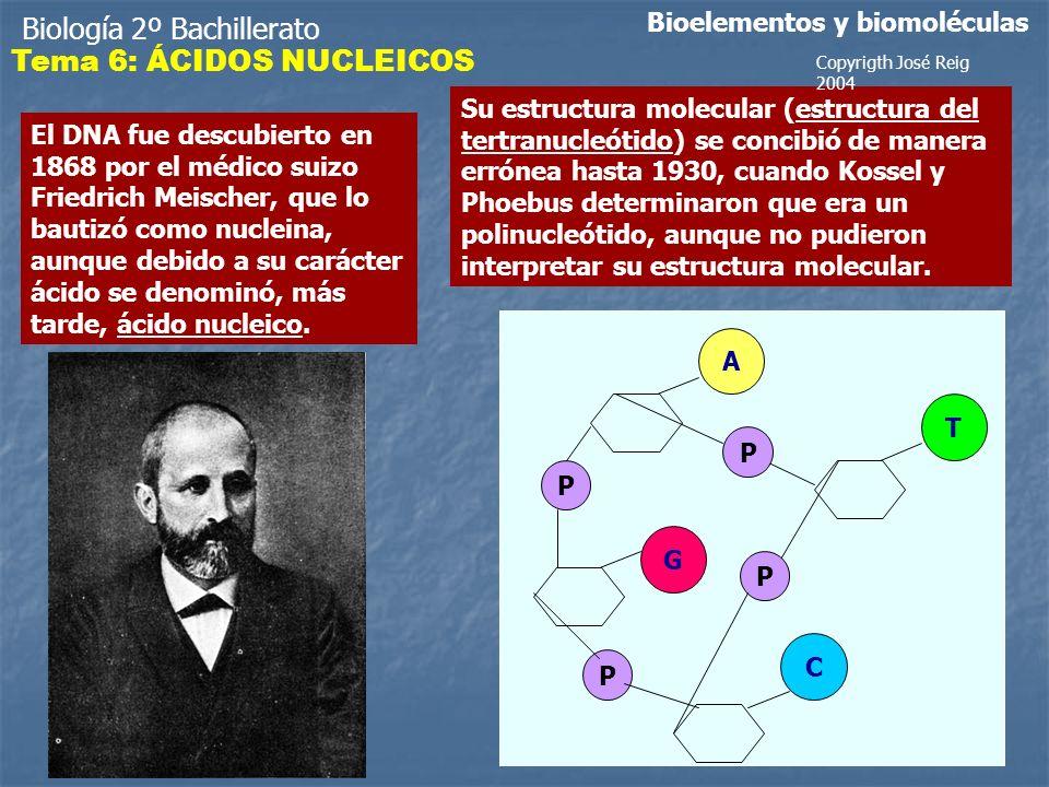 Biología 2º Bachillerato Bioelementos y biomoléculas El DNA fue descubierto en 1868 por el médico suizo Friedrich Meischer, que lo bautizó como nucleina, aunque debido a su carácter ácido se denominó, más tarde, ácido nucleico.