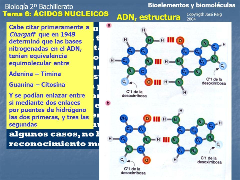 Biología 2º Bachillerato Bioelementos y biomoléculas ADN, estructura La evidencia de que el DNA era la molécula responsable de la transmisión de los caracteres hereditarios propició que numerosos equipos de investigadores en biología molecular trataran de determinar con precisión la estructura molecular del mismo.