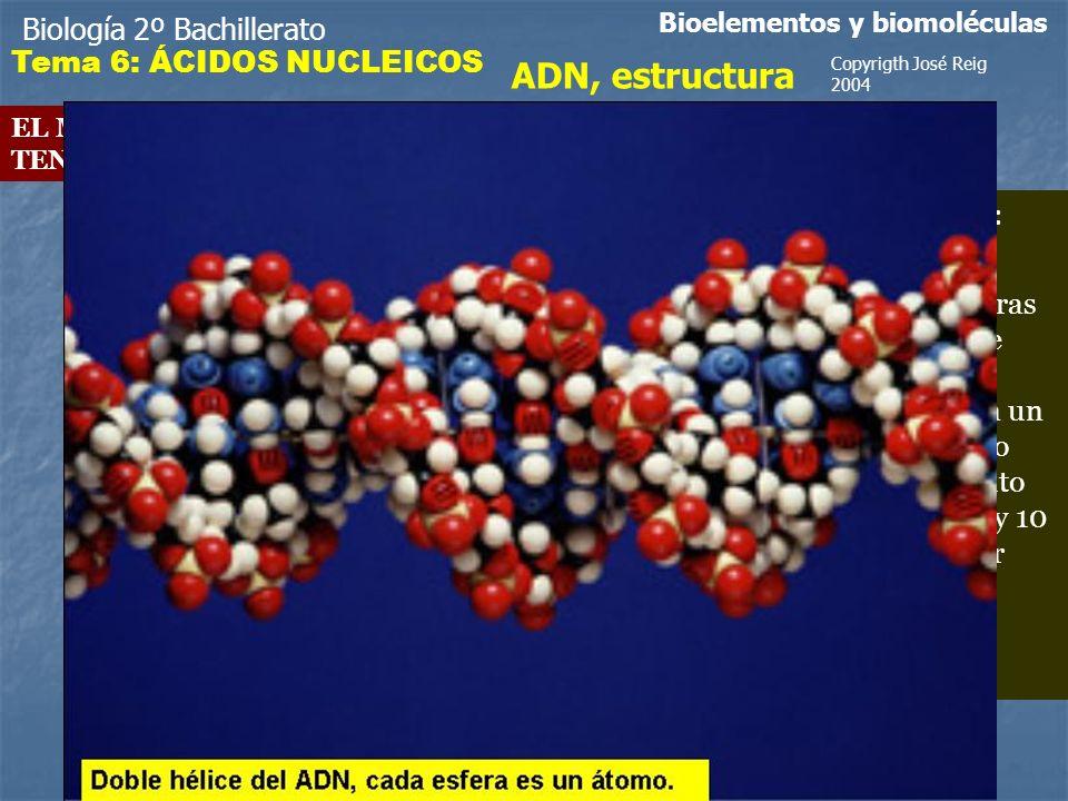 Biología 2º Bachillerato Bioelementos y biomoléculas ADN, estructura EL MODELO PROPUESTO POR WATSON Y CRICK TENÍA LOS SIGUIENTES VALORES ESTRUCTURALES.