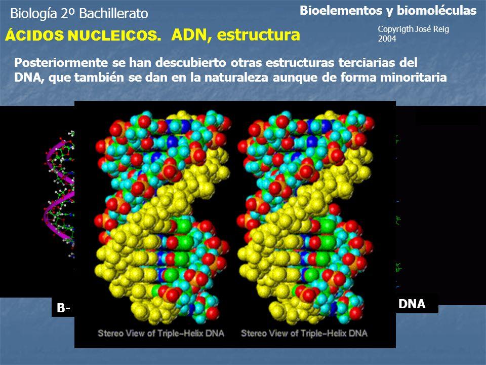 Biología 2º Bachillerato Bioelementos y biomoléculas ÁCIDOS NUCLEICOS.