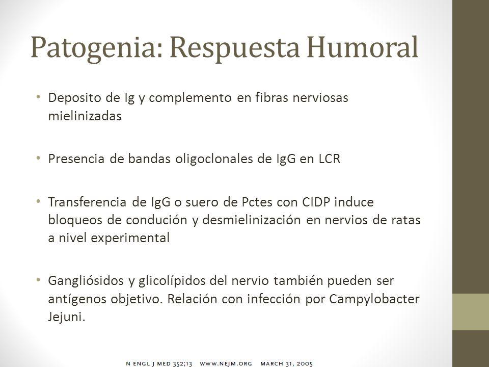 Patogenia: Respuesta Humoral Deposito de Ig y complemento en fibras nerviosas mielinizadas Presencia de bandas oligoclonales de IgG en LCR Transferenc