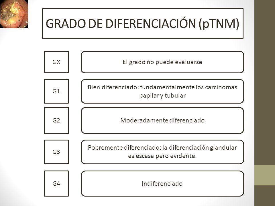 GRADO DE DIFERENCIACIÓN (pTNM) GX G1 G2 G3 G4 El grado no puede evaluarse Bien diferenciado: fundamentalmente los carcinomas papilar y tubular Moderad