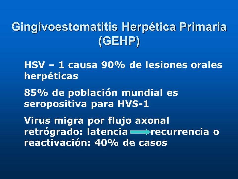 Gingivoestomatitis Herpética Primaria (GEHP) HSV – 1 causa 90% de lesiones orales herpéticas 85% de población mundial es seropositiva para HVS-1 Virus migra por flujo axonal retrógrado: latencia recurrencia o reactivación: 40% de casos