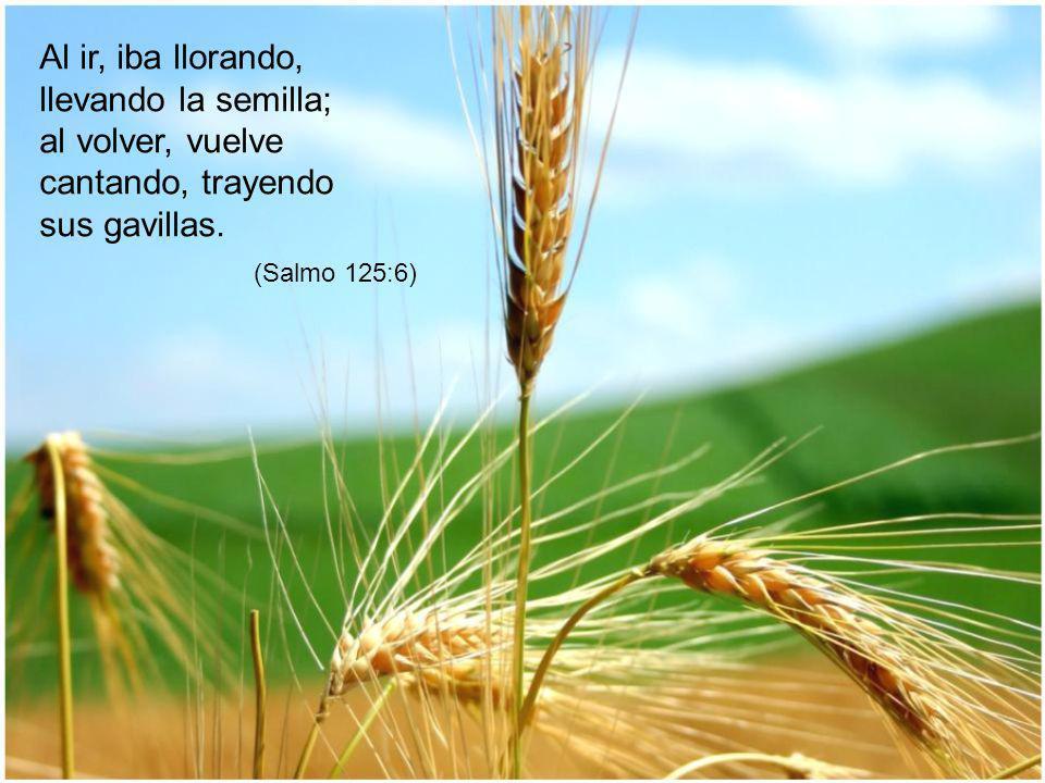 Al ir, iba llorando, llevando la semilla; al volver, vuelve cantando, trayendo sus gavillas.