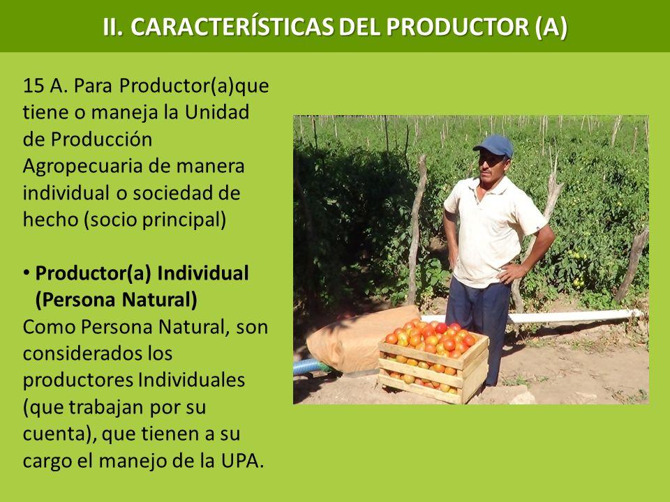 15 A. Para Productor(a)que tiene o maneja la Unidad de Producción Agropecuaria de manera individual o sociedad de hecho (socio principal) Productor(a)