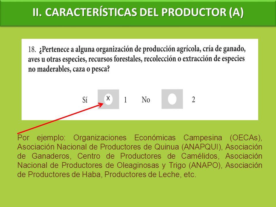 II. CARACTERÍSTICAS DEL PRODUCTOR (A) Por ejemplo: Organizaciones Económicas Campesina (OECAs), Asociación Nacional de Productores de Quinua (ANAPQUI)