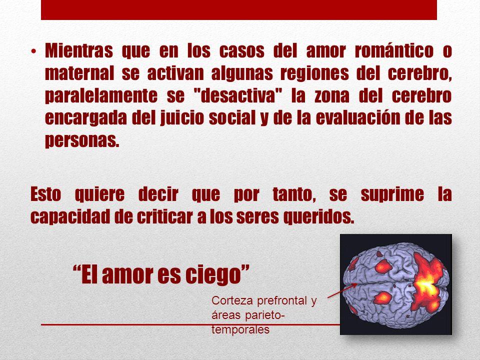 Mientras que en los casos del amor romántico o maternal se activan algunas regiones del cerebro, paralelamente se