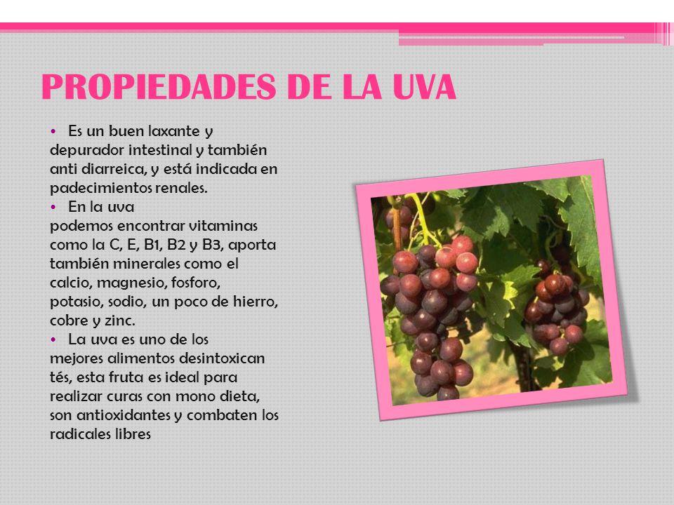 PROPIEDADES DE LA UVA Es un buen laxante y depurador intestinal y también anti diarreica, y está indicada en padecimientos renales. En la uva podemos