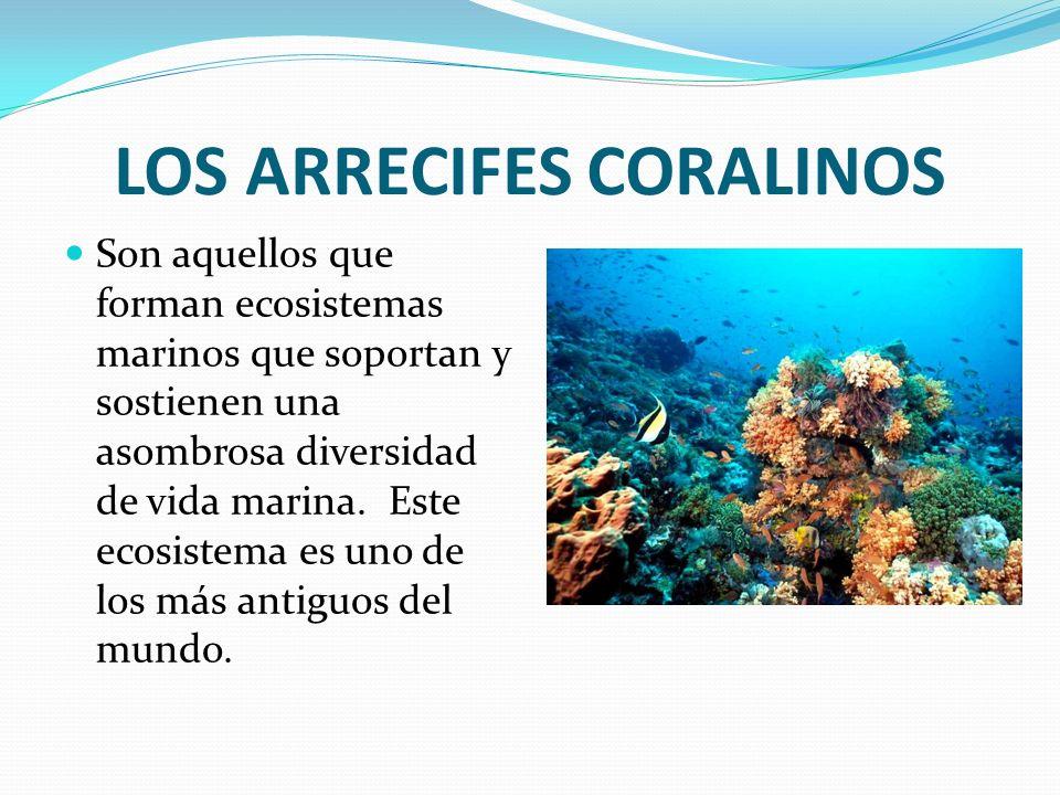 LOS ARRECIFES CORALINOS Son aquellos que forman ecosistemas marinos que soportan y sostienen una asombrosa diversidad de vida marina. Este ecosistema