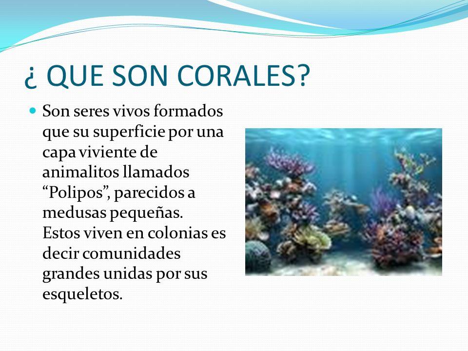 IMPORTANCIA DE LOS ARRECIFES DE CORAL Proveen perfecto hábitat para una diversidad increíble de vida marina.
