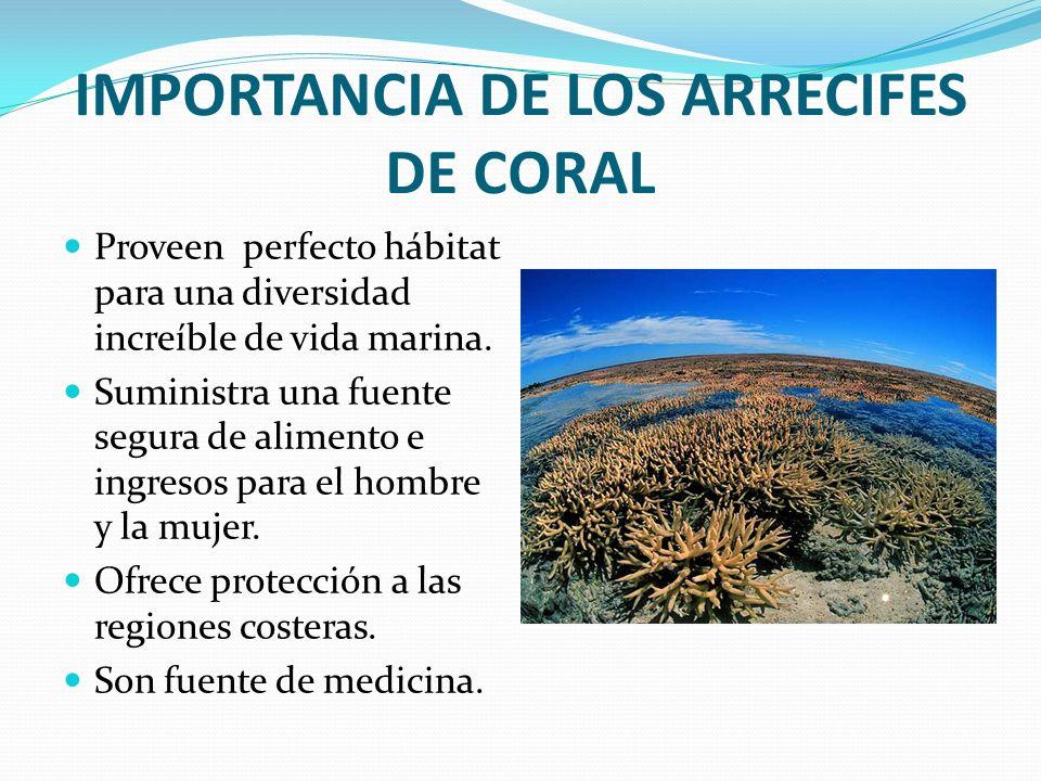 IMPORTANCIA DE LOS ARRECIFES DE CORAL Proveen perfecto hábitat para una diversidad increíble de vida marina. Suministra una fuente segura de alimento