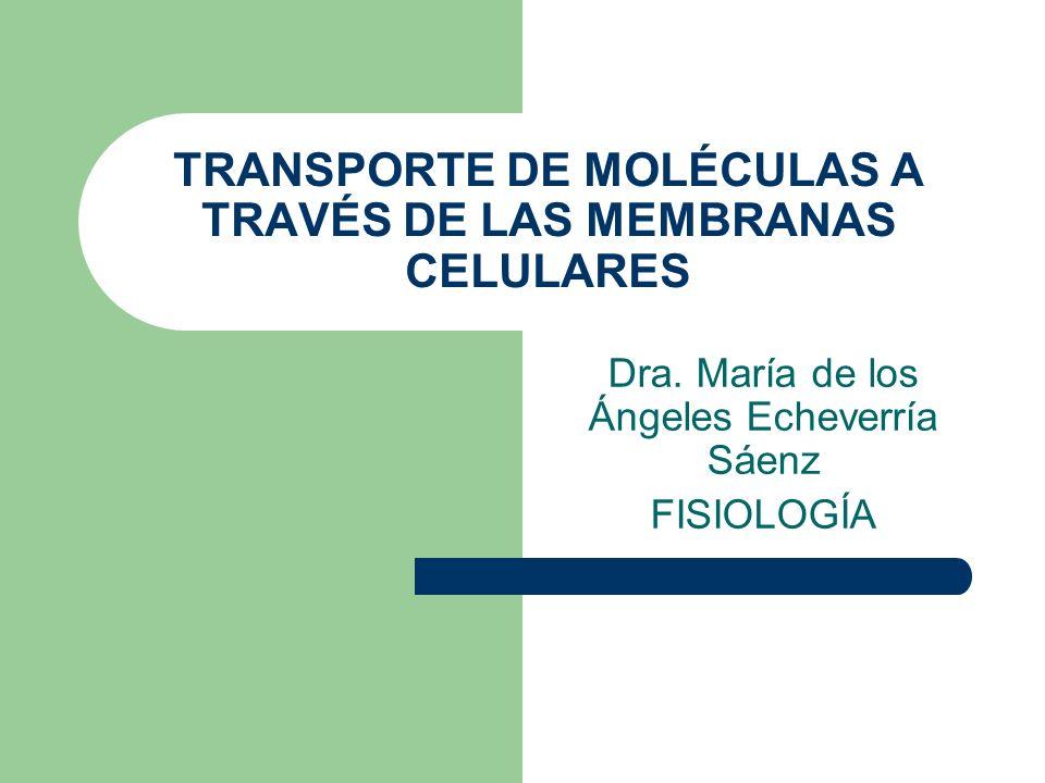 TRANSPORTE DE MOLÉCULAS A TRAVÉS DE LAS MEMBRANAS CELULARES Dra. María de los Ángeles Echeverría Sáenz FISIOLOGÍA