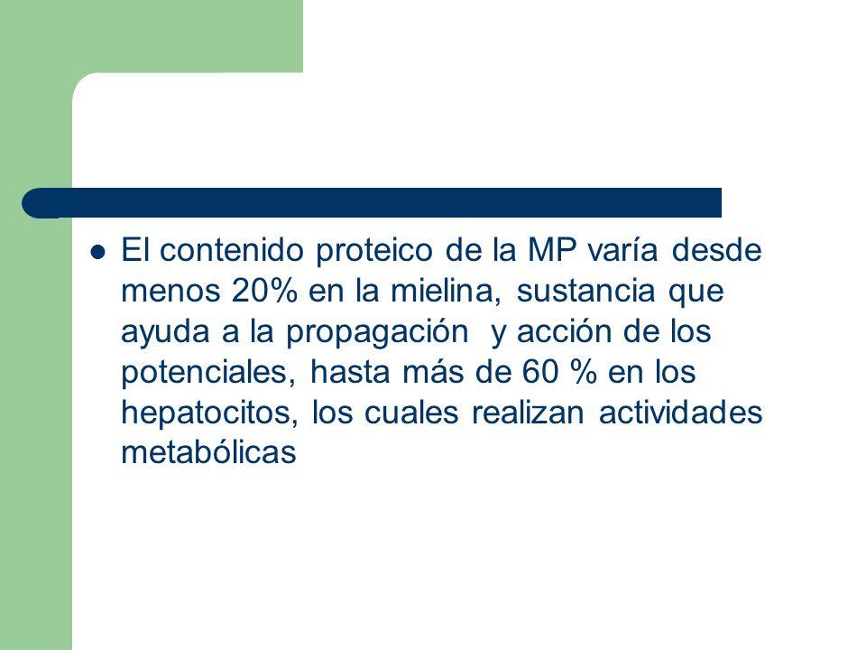 El contenido proteico de la MP varía desde menos 20% en la mielina, sustancia que ayuda a la propagación y acción de los potenciales, hasta más de 60