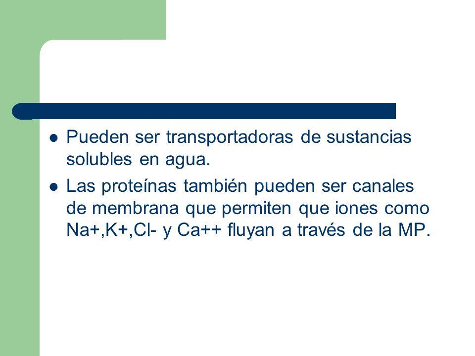 Pueden ser transportadoras de sustancias solubles en agua. Las proteínas también pueden ser canales de membrana que permiten que iones como Na+,K+,Cl-