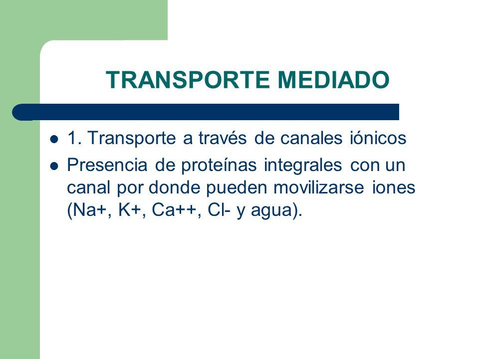 TRANSPORTE MEDIADO 1. Transporte a través de canales iónicos Presencia de proteínas integrales con un canal por donde pueden movilizarse iones (Na+, K