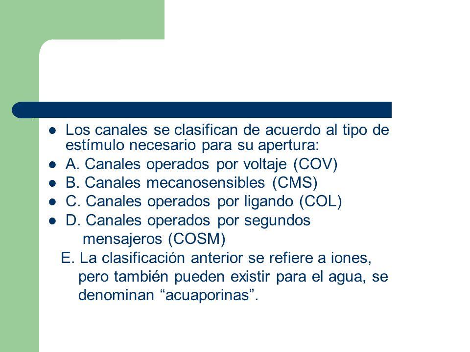 Los canales se clasifican de acuerdo al tipo de estímulo necesario para su apertura: A. Canales operados por voltaje (COV) B. Canales mecanosensibles