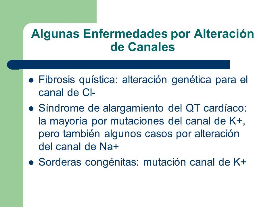 Algunas Enfermedades por Alteración de Canales Fibrosis quística: alteración genética para el canal de Cl- Síndrome de alargamiento del QT cardíaco: la mayoría por mutaciones del canal de K+, pero también algunos casos por alteración del canal de Na+ Sorderas congénitas: mutación canal de K+