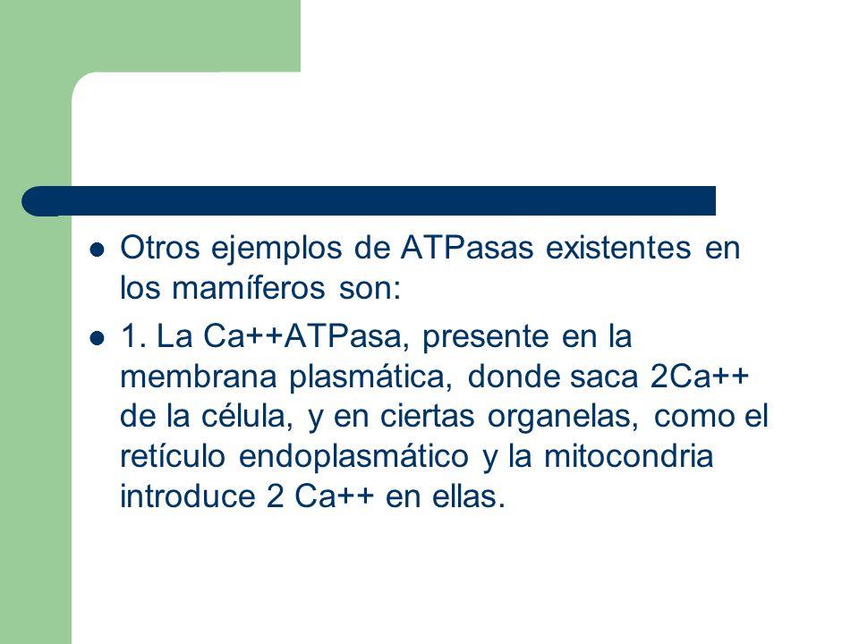 Otros ejemplos de ATPasas existentes en los mamíferos son: 1. La Ca++ATPasa, presente en la membrana plasmática, donde saca 2Ca++ de la célula, y en c