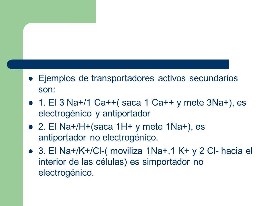 Ejemplos de transportadores activos secundarios son: 1. El 3 Na+/1 Ca++( saca 1 Ca++ y mete 3Na+), es electrogénico y antiportador 2. El Na+/H+(saca 1