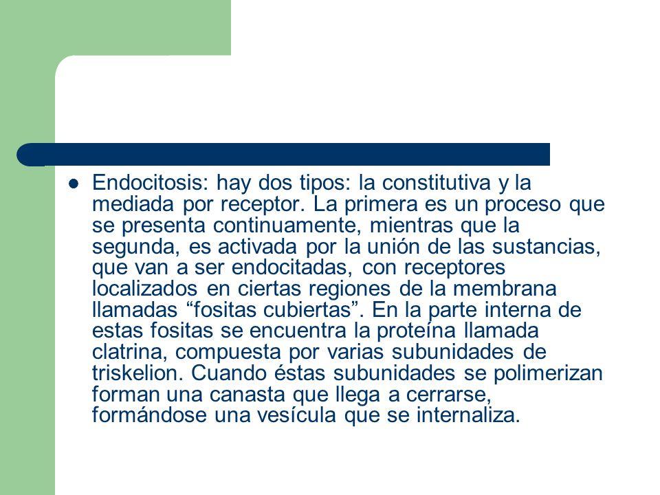 Endocitosis: hay dos tipos: la constitutiva y la mediada por receptor. La primera es un proceso que se presenta continuamente, mientras que la segunda