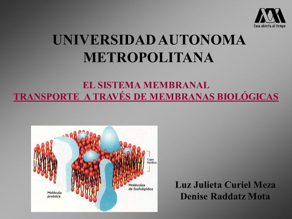 UNIVERSIDAD AUTONOMA METROPOLITANA EL SISTEMA MEMBRANAL TRANSPORTE A TRAVÉS DE MEMBRANAS BIOLÓGICAS Luz Julieta Curiel Meza Denise Raddatz Mota