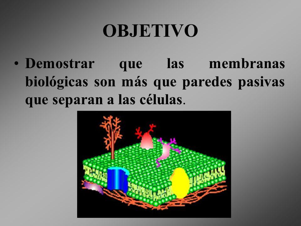 OBJETIVO Demostrar que las membranas biológicas son más que paredes pasivas que separan a las células.