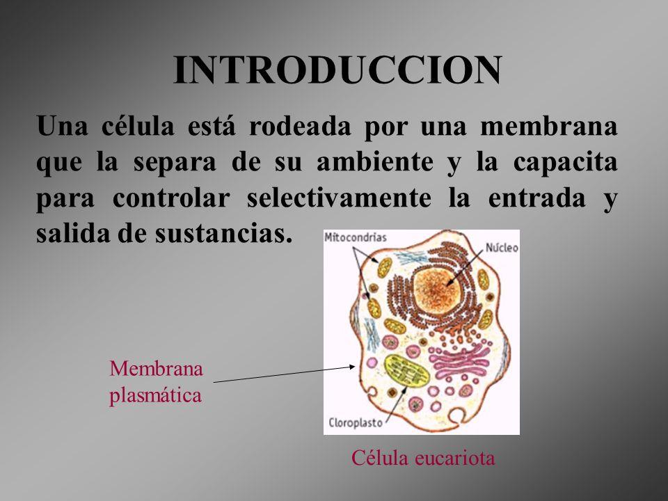 INTRODUCCION Una célula está rodeada por una membrana que la separa de su ambiente y la capacita para controlar selectivamente la entrada y salida de