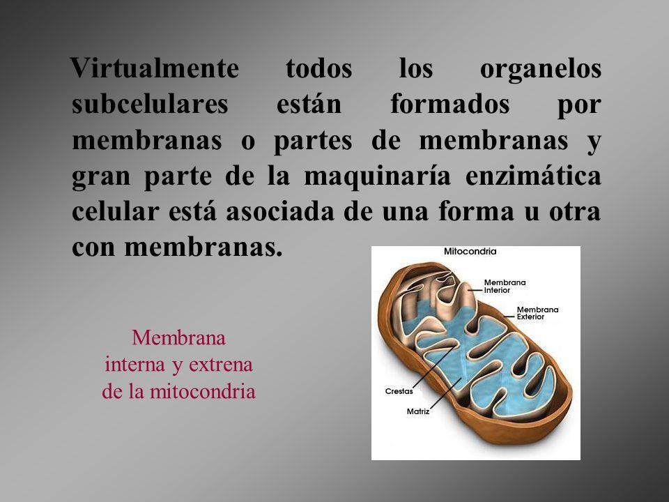 Virtualmente todos los organelos subcelulares están formados por membranas o partes de membranas y gran parte de la maquinaría enzimática celular está