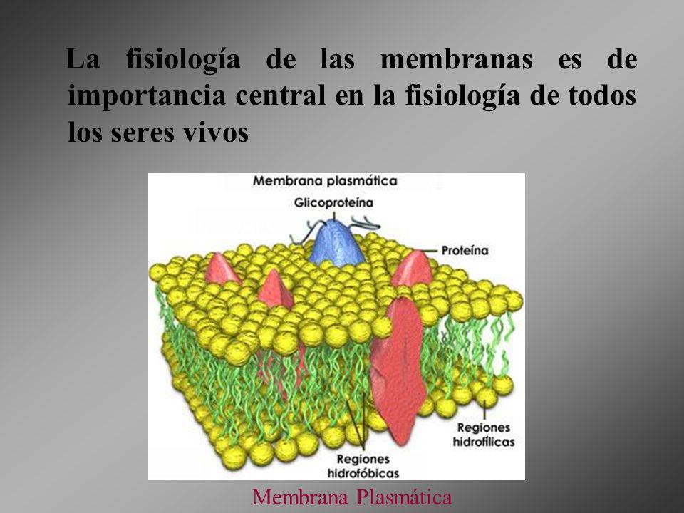 La fisiología de las membranas es de importancia central en la fisiología de todos los seres vivos Membrana Plasmática