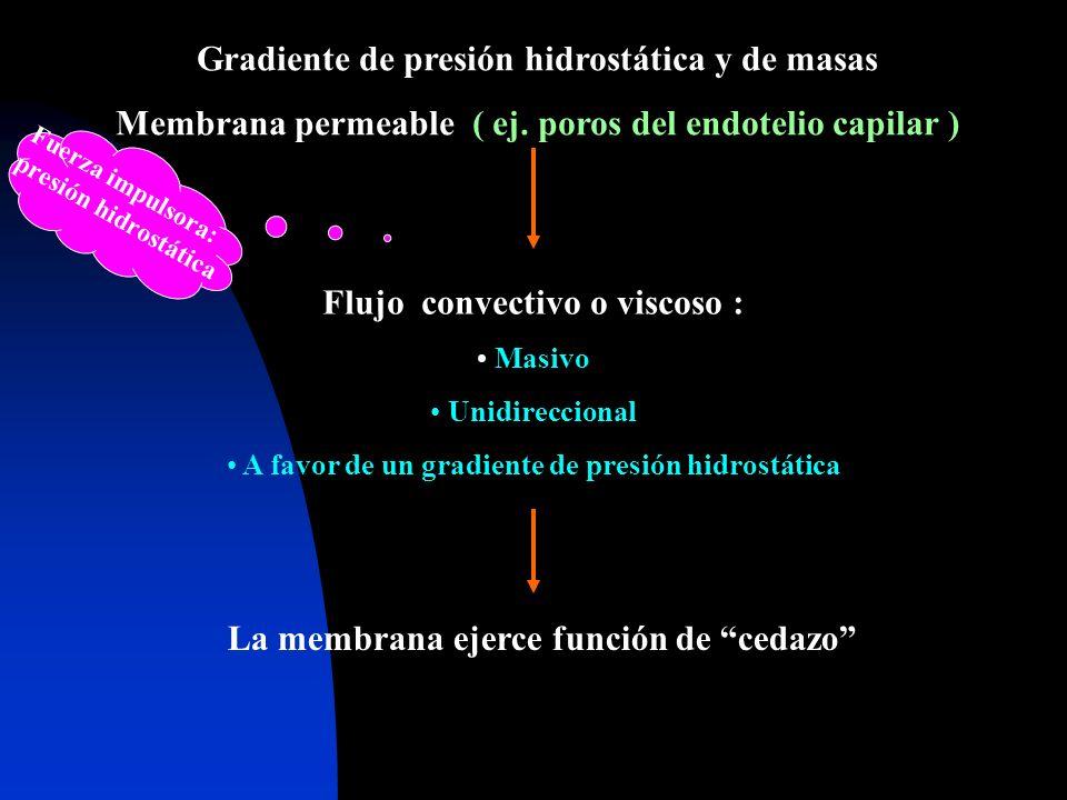 Gradiente de presión hidrostática y de masas Membrana permeable ( ej. poros del endotelio capilar ) Flujo convectivo o viscoso : Masivo Unidireccional