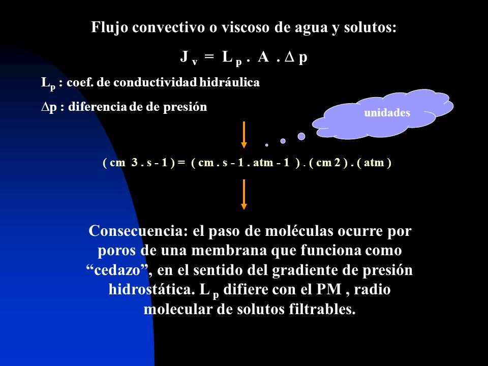 Flujo convectivo o viscoso de agua y solutos: J v = L p. A. p L p : coef. de conductividad hidráulica p : diferencia de de presión ( cm 3. s - 1 ) = (