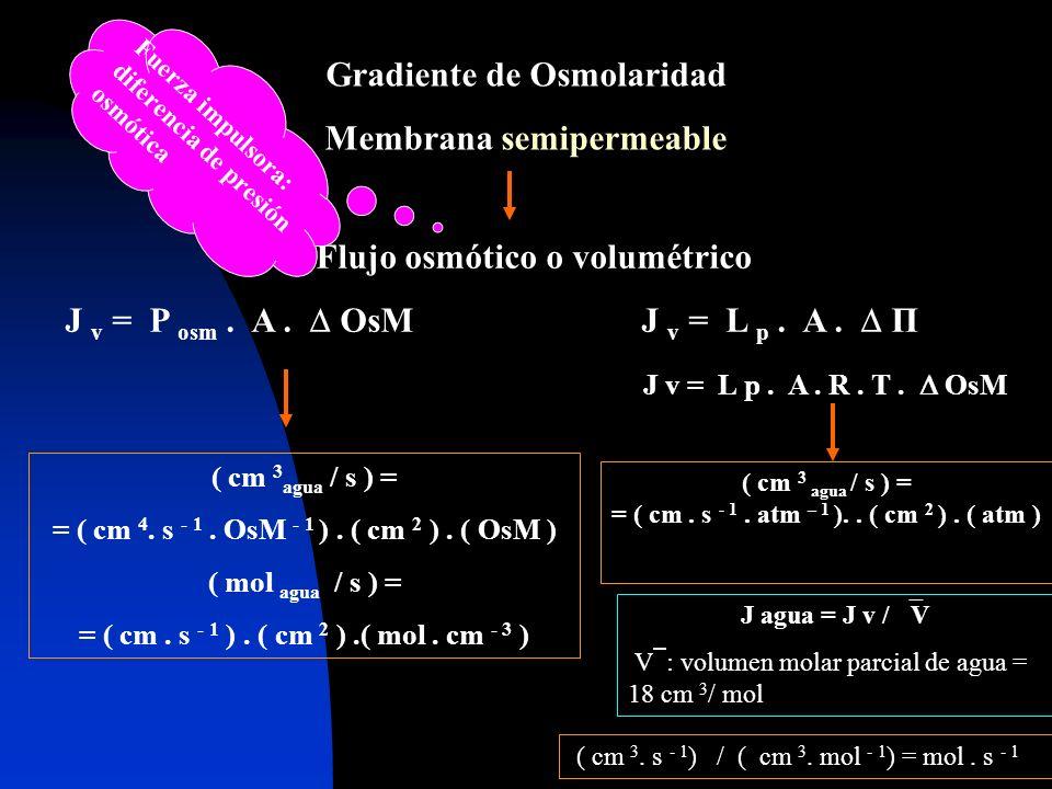 Gradiente de Osmolaridad Membrana semipermeable Flujo osmótico o volumétrico J v = P osm. A. OsM J v = L p. A. П J v = L p. A. R. T. OsM ( cm 3 agua /
