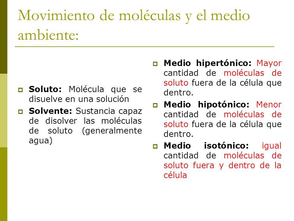 Movimiento de moléculas y el medio ambiente: Soluto: Molécula que se disuelve en una solución Solvente: Sustancia capaz de disolver las moléculas de s