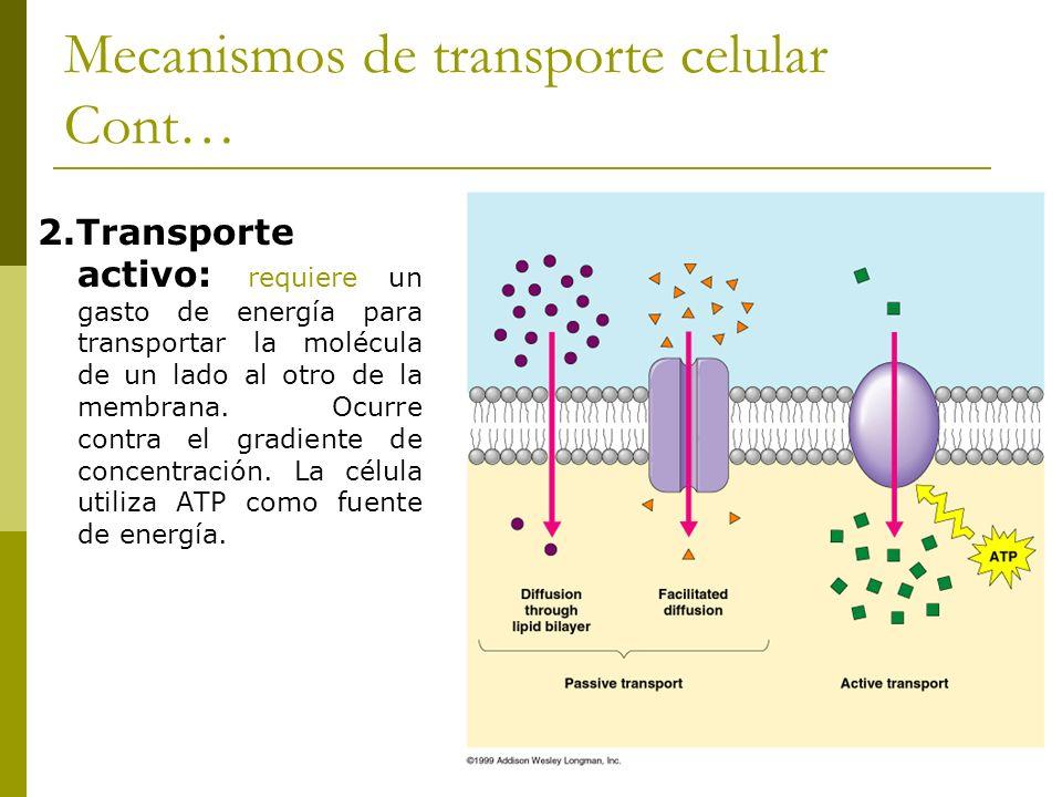 Mecanismos de transporte celular Cont… 2.Transporte activo: requiere un gasto de energía para transportar la molécula de un lado al otro de la membran