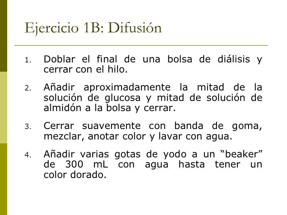 Ejercicio 1B: Difusión 1. Doblar el final de una bolsa de diálisis y cerrar con el hilo. 2. Añadir aproximadamente la mitad de la solución de glucosa