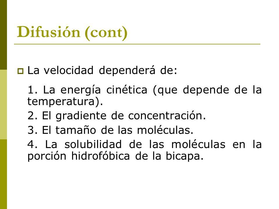 Difusión (cont) La velocidad dependerá de: 1. La energía cinética (que depende de la temperatura). 2. El gradiente de concentración. 3. El tamaño de l