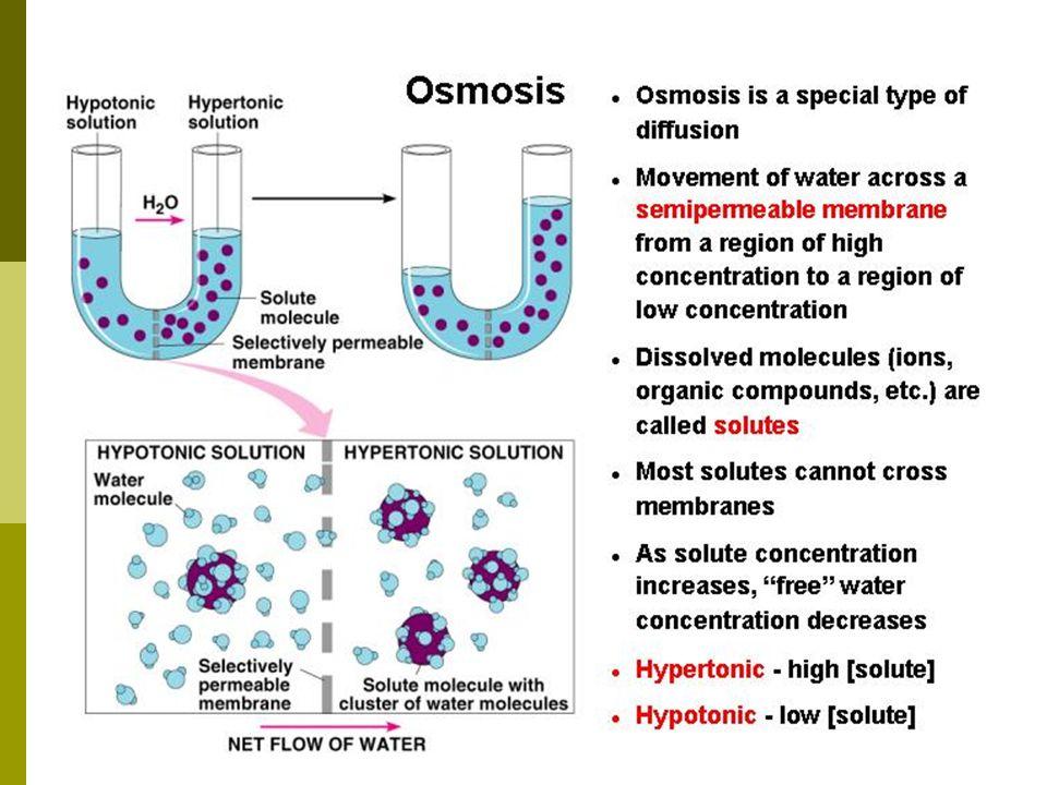Osmosis Difusión de agua a través de una membrana que permite el flujo de agua, pero inhibe el movimiento de la mayoría de solutos.