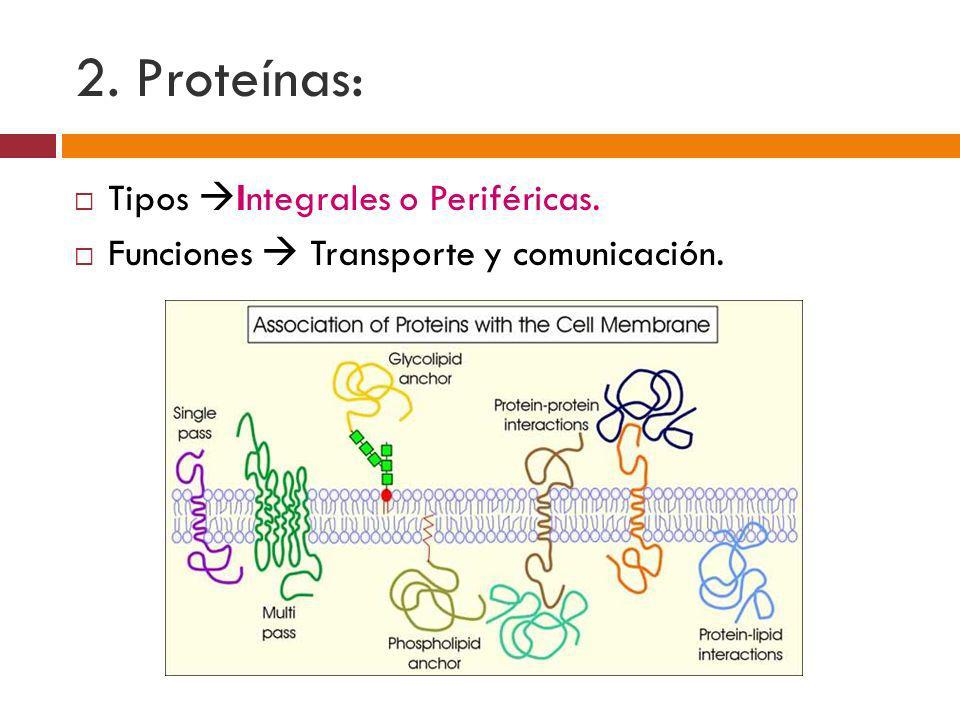 2. Proteínas: Tipos Integrales o Periféricas. Funciones Transporte y comunicación.