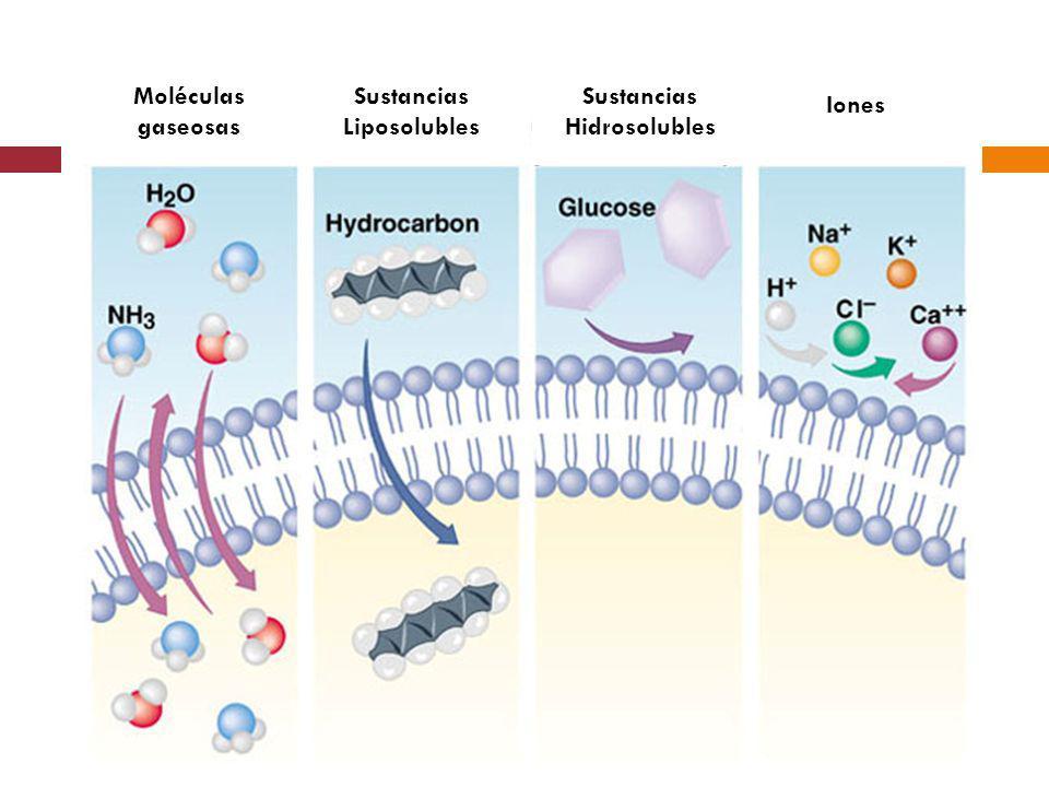 Moléculas gaseosas Sustancias Liposolubles Sustancias Hidrosolubles Iones