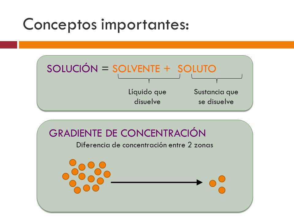 Conceptos importantes: SOLUCIÓN = SOLVENTE + SOLUTO Líquido que disuelve Sustancia que se disuelve GRADIENTE DE CONCENTRACIÓN Diferencia de concentrac