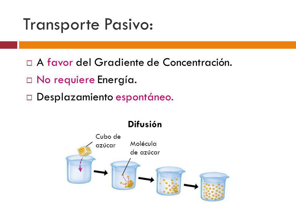 Transporte Pasivo: A favor del Gradiente de Concentración. No requiere Energía. Desplazamiento espontáneo. Difusión Cubo de azúcar Molécula de azúcar