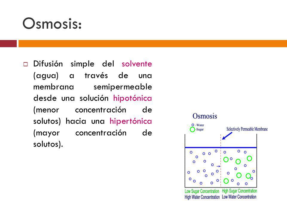 Osmosis: Difusión simple del solvente (agua) a través de una membrana semipermeable desde una solución hipotónica (menor concentración de solutos) hac
