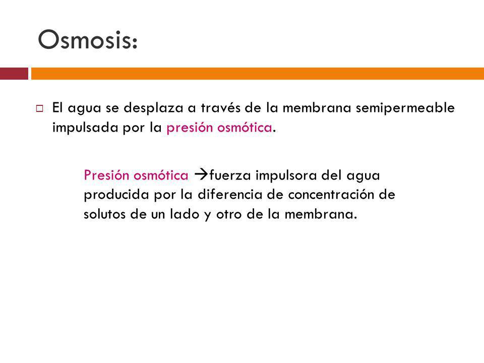 Osmosis: El agua se desplaza a través de la membrana semipermeable impulsada por la presión osmótica. Presión osmótica fuerza impulsora del agua produ