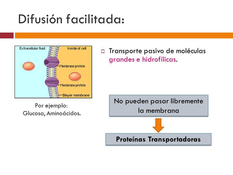 Difusión facilitada: Transporte pasivo de moléculas grandes e hidrofílicas. Por ejemplo: Glucosa, Aminoácidos. No pueden pasar libremente la membrana
