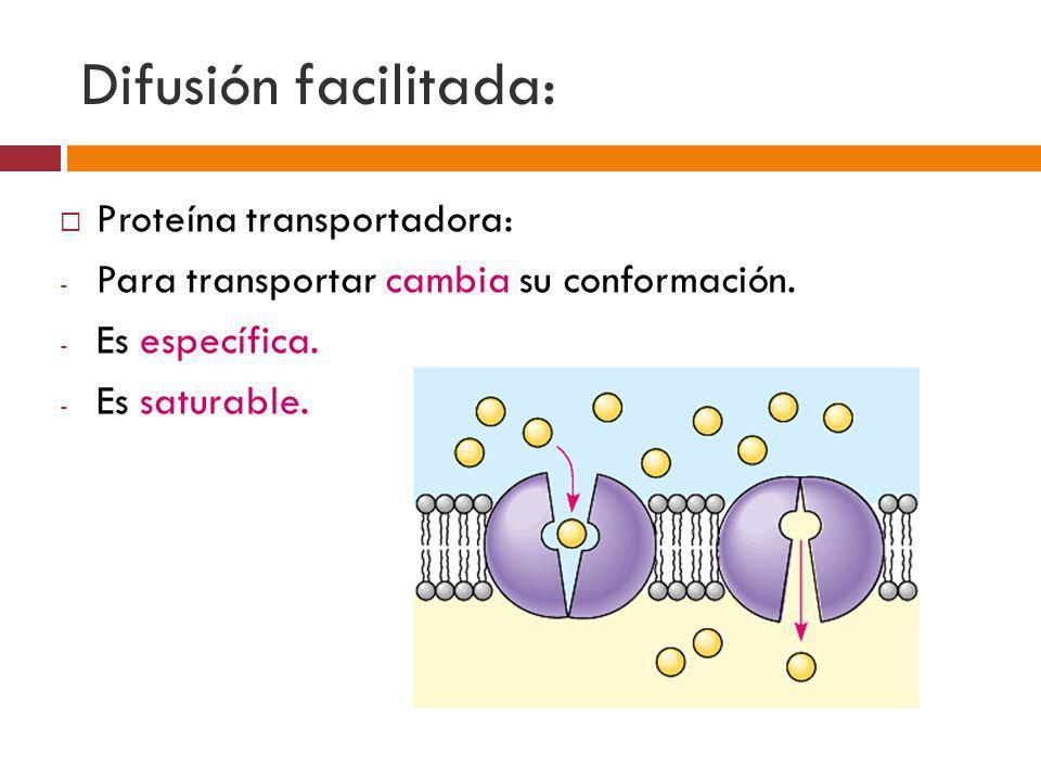 Difusión facilitada: Proteína transportadora: - Para transportar cambia su conformación. - Es específica. - Es saturable.
