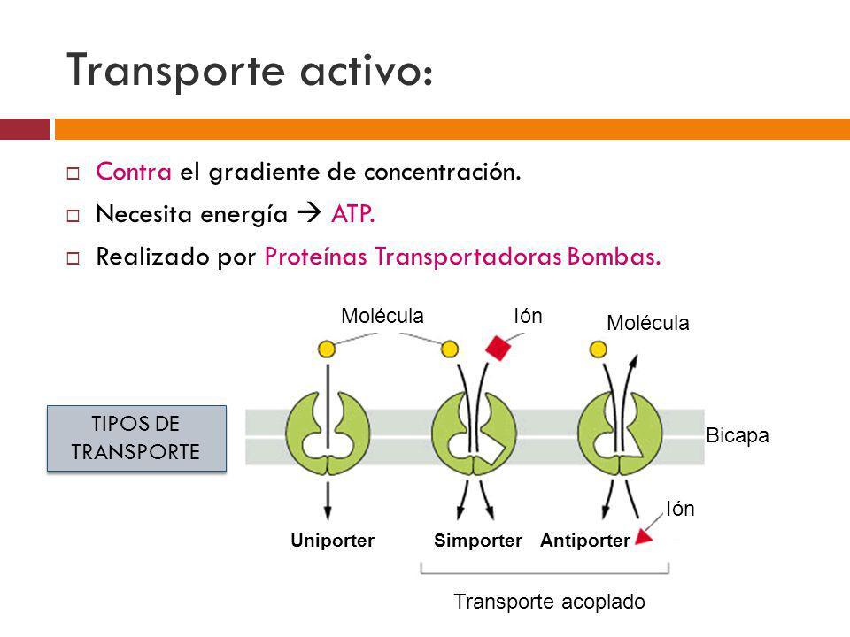 Contra el gradiente de concentración. Necesita energía ATP. Realizado por Proteínas Transportadoras Bombas. Transporte activo: TIPOS DE TRANSPORTE Mol