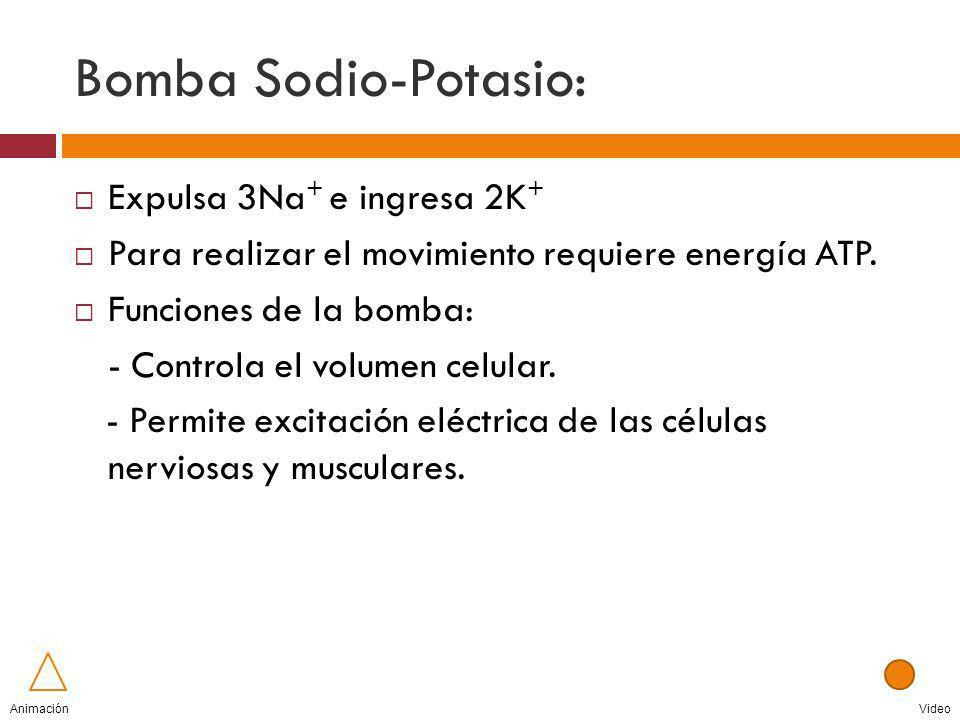 Bomba Sodio-Potasio: Expulsa 3Na + e ingresa 2K + Para realizar el movimiento requiere energía ATP. Funciones de la bomba: - Controla el volumen celul